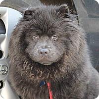 Adopt A Pet :: Athena - Tucker, GA