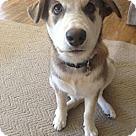 Adopt A Pet :: Willow