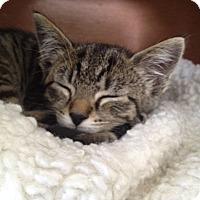 Adopt A Pet :: Parker - Island Park, NY