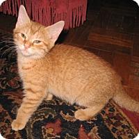 Adopt A Pet :: Conrad-Adopted! - Colmar, PA