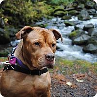 Adopt A Pet :: Iris (foster) - Portland, OR
