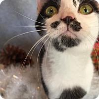 Adopt A Pet :: Katie Belle - Fredericksburg, VA