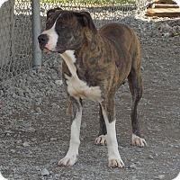 Adopt A Pet :: Ennis - Lewisburg, TN