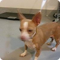 Adopt A Pet :: Jasmine - Muskegon, MI