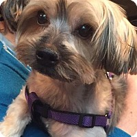Adopt A Pet :: Duffy - N. Babylon, NY