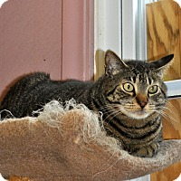 Adopt A Pet :: Joe - West Hartford, CT