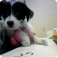 Adopt A Pet :: A273963 - Conroe, TX