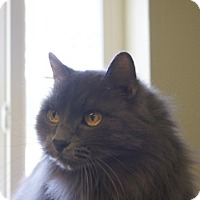 Adopt A Pet :: Bob - Libby, MT