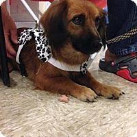 Adopt A Pet :: Reba - Hedgesville, WV