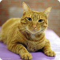 Adopt A Pet :: Taft - Tucson, AZ