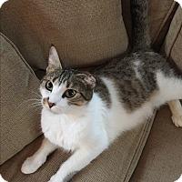 Adopt A Pet :: Lola Mom - Plainville, MA