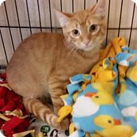 Adopt A Pet :: Rusty - Cumming, GA
