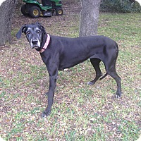 Adopt A Pet :: Bella - Austin, TX