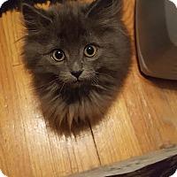 Adopt A Pet :: Terry C1559 - Shakopee, MN