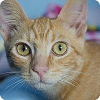 Adopt A Pet :: Pupusa - Los Angeles, CA