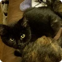 Adopt A Pet :: Glen - South Bend, IN