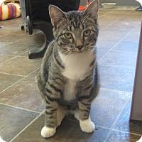 Adopt A Pet :: Savannah - Ridgway, CO