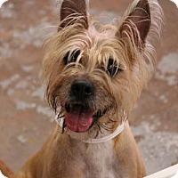 Adopt A Pet :: Yeti - Phoenix, AZ