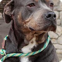 Adopt A Pet :: Naomi - Savannah, MO