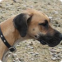 Adopt A Pet :: Jack - Woodstock, IL