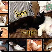 Adopt A Pet :: Casper - Washington, DC