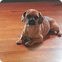 Adopt A Pet :: Bernie Mac - Orlando, FL