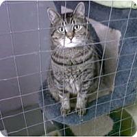 Adopt A Pet :: Sash - Mission, BC