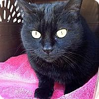 Adopt A Pet :: Cagney - Irvine, CA