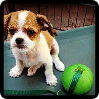 Adopt A Pet :: Stackhouse - Los Angeles, CA
