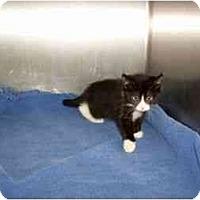 Adopt A Pet :: Libby - Secaucus, NJ