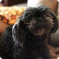 Adopt A Pet :: Ozzy - Sacramento, CA