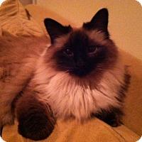 Adopt A Pet :: sassy - Nanuet, NY