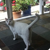 Adopt A Pet :: *GOLDIE - Winder, GA