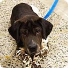 Adopt A Pet :: Flash