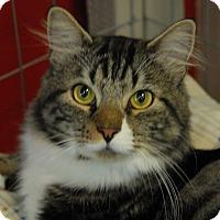 Adopt A Pet :: Zeus - Winchendon, MA