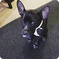 Adopt A Pet :: Aurora - Las Vegas, NV