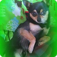 Adopt A Pet :: AXEL - Hurricane, UT