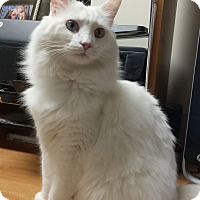 Adopt A Pet :: Casper - Scottsdale, AZ