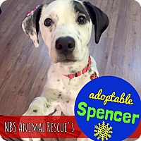 Adopt A Pet :: Spencer - Troy, MI