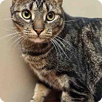 Adopt A Pet :: Milo - Plainfield, IL