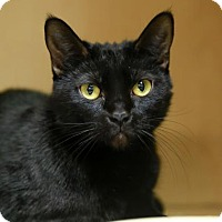 Adopt A Pet :: Amika - Kettering, OH