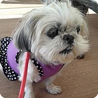 Adopt A Pet :: Jema - Las Vegas, NV