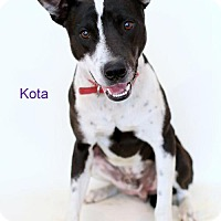 Adopt A Pet :: Kota - Bloomington, MN
