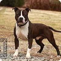 Adopt A Pet :: Spotsylvania Shelter #16- Ace - Fredericksburg, VA