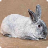 Adopt A Pet :: Skippie - Los Angeles, CA