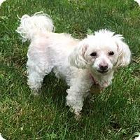 Adopt A Pet :: Daisy - Oak Ridge, NJ