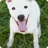 Adopt A Pet :: Freckles (Reduced Fee) - Washington, DC