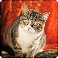 Adopt A Pet :: Marie - Cincinnati, OH