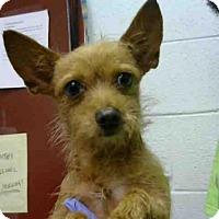 Adopt A Pet :: JET - Atlanta, GA