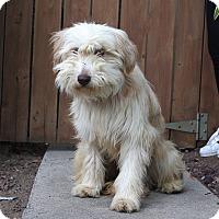 Adopt A Pet :: Fresca - Los Angeles, CA